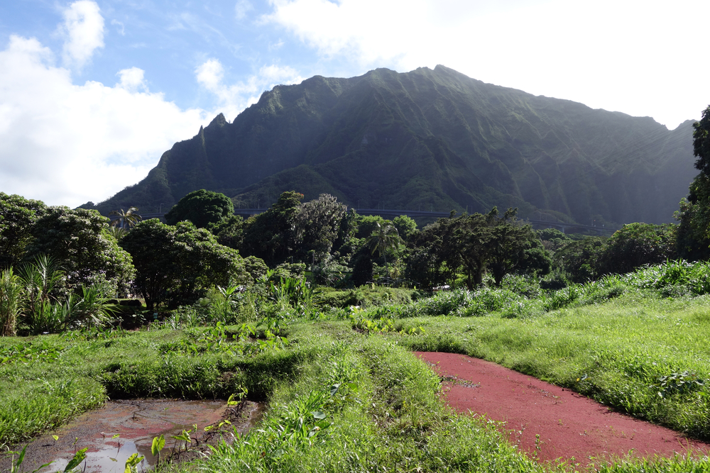Budget Oahu Airbnbs
