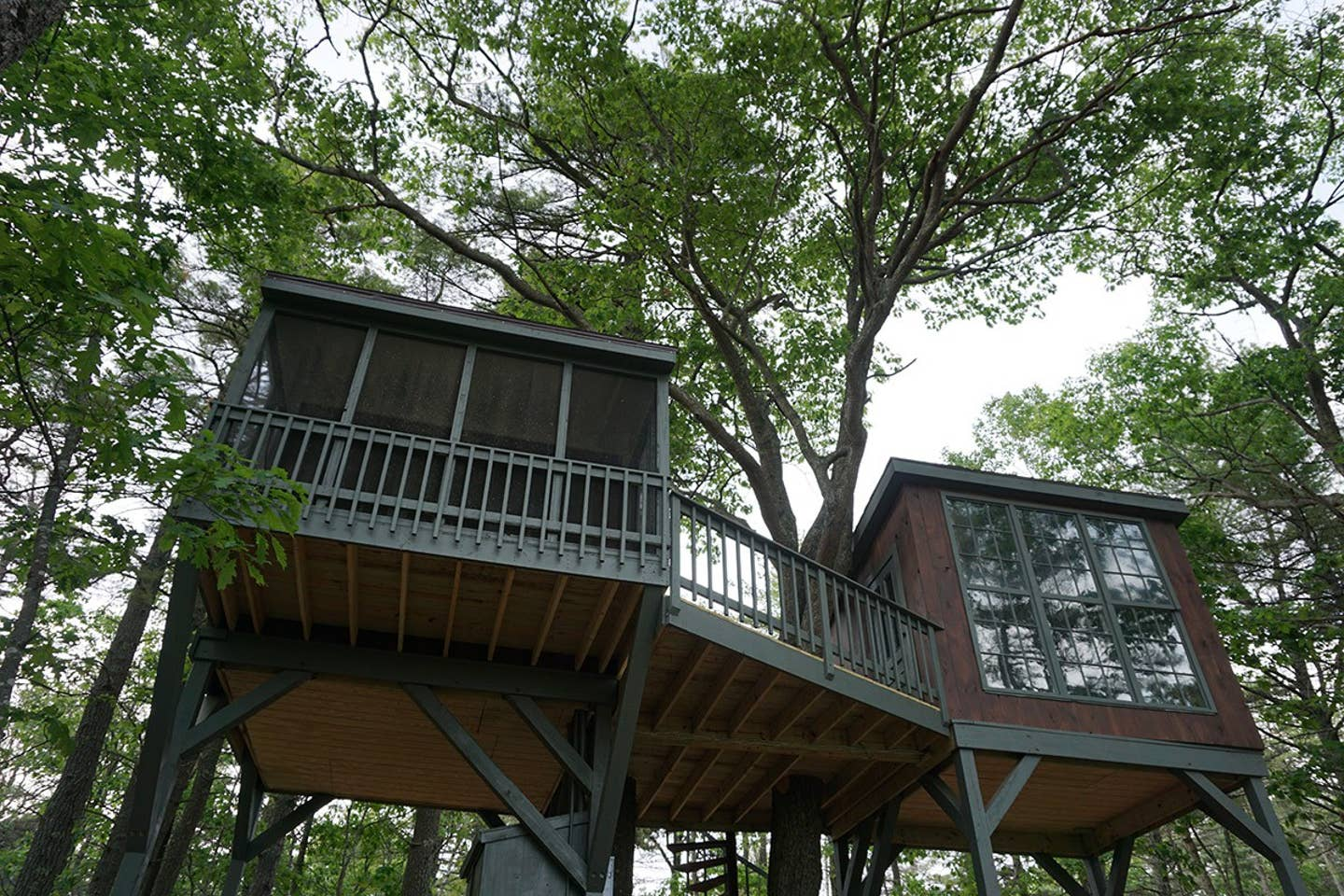 Tree house airbnb maine