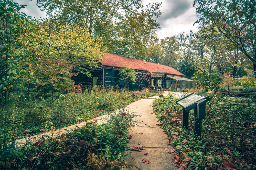 Asheville Airbnbs For Groups