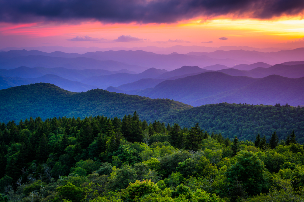 Best Airbnbs In Asheville