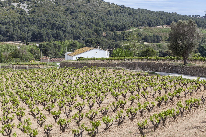 El PENEDÈS Wine - Day Trip from barcelona