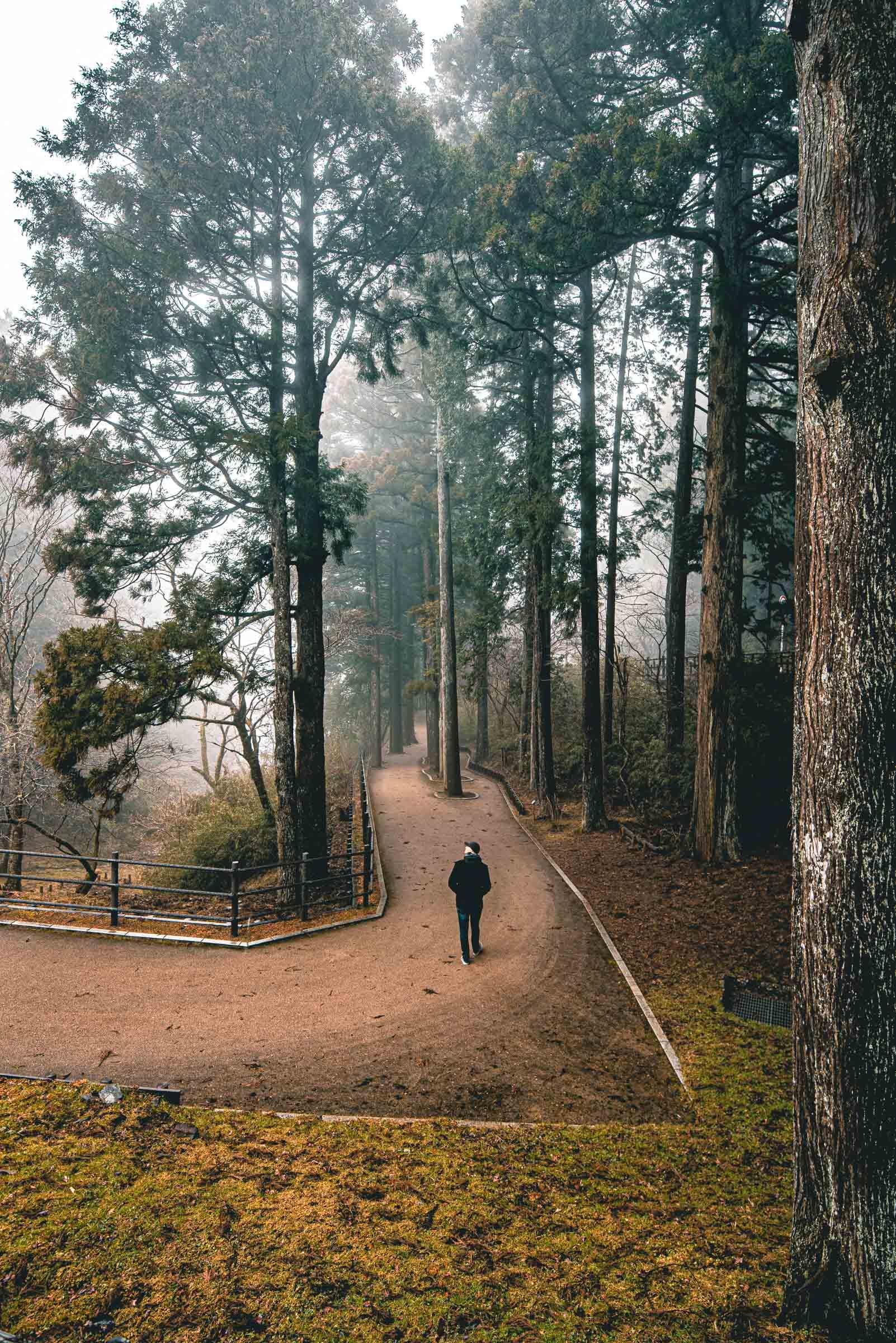 Suginamiki Japanese Cedar Walk