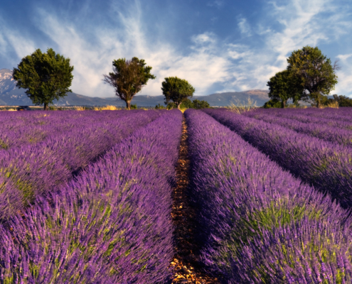 The Best Quotes About France