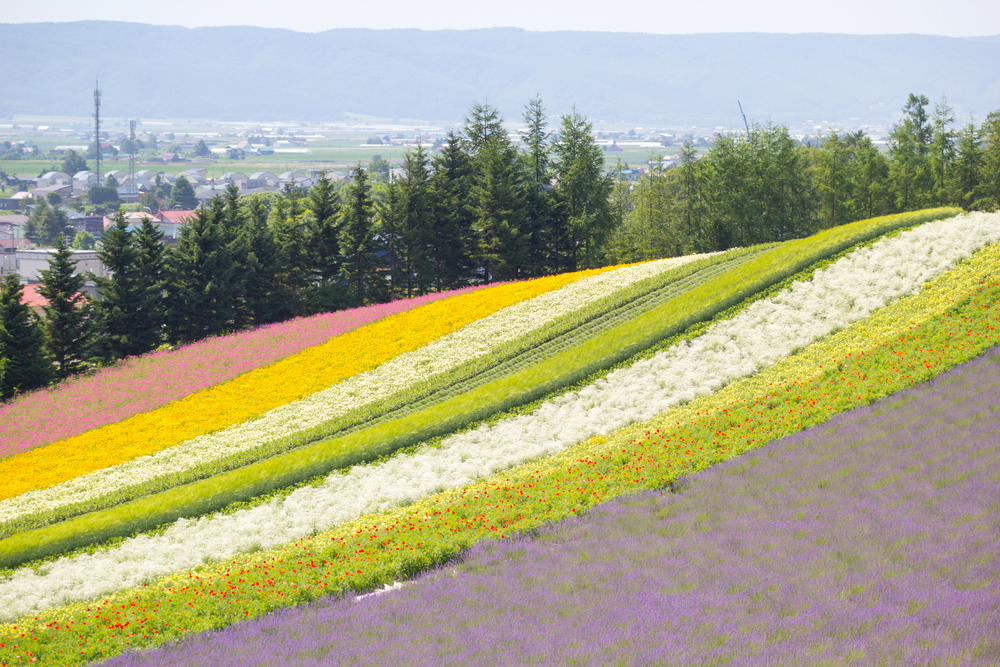 Things to Do In Furano
