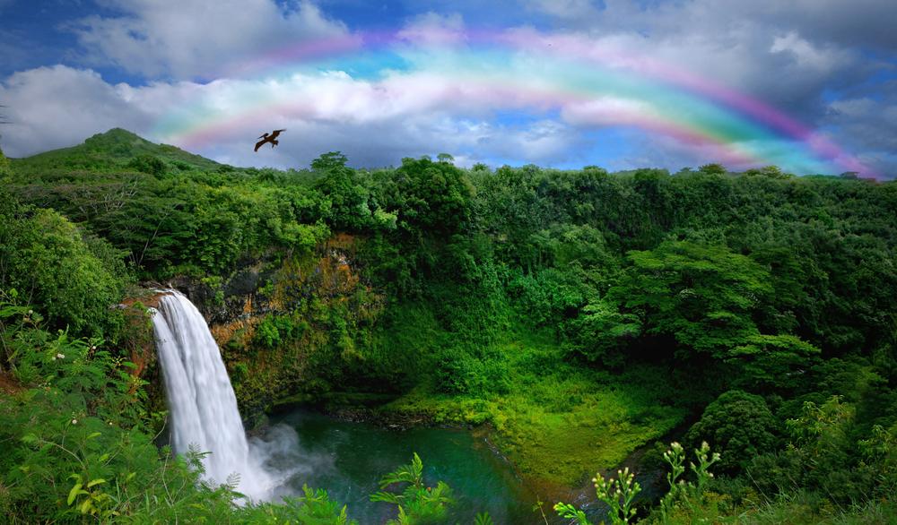 Cheap Kauai Airbnb