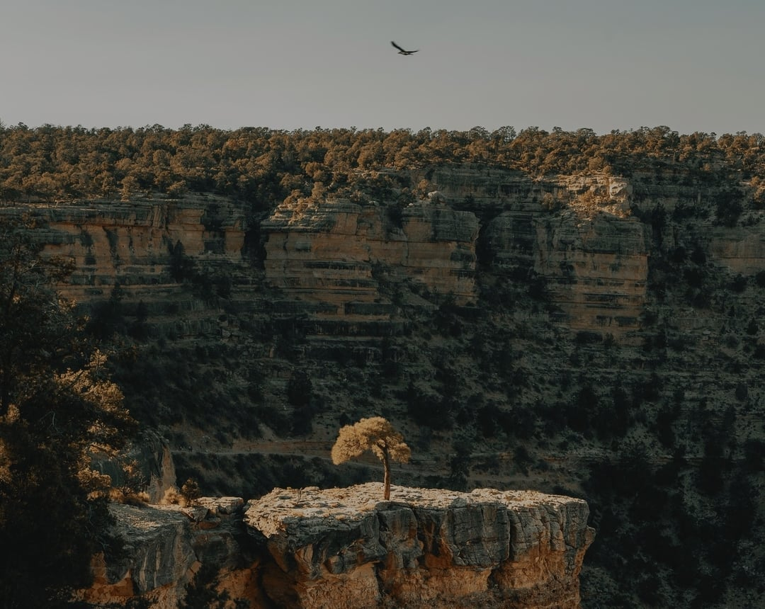 A tree on an outcropping section of the Grand Canyon