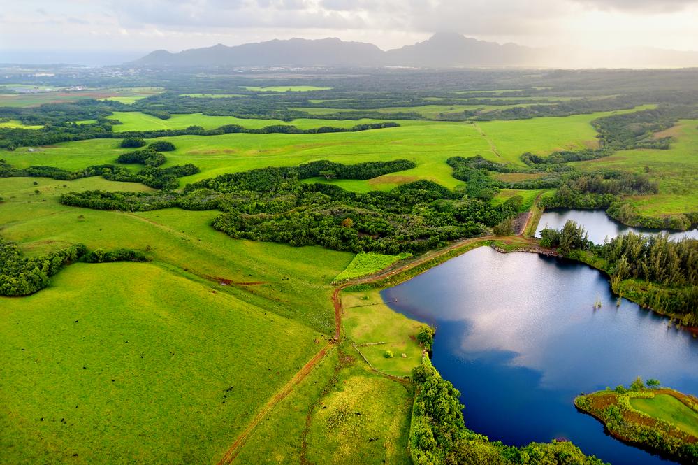 Treehouse Kauai Airbnb