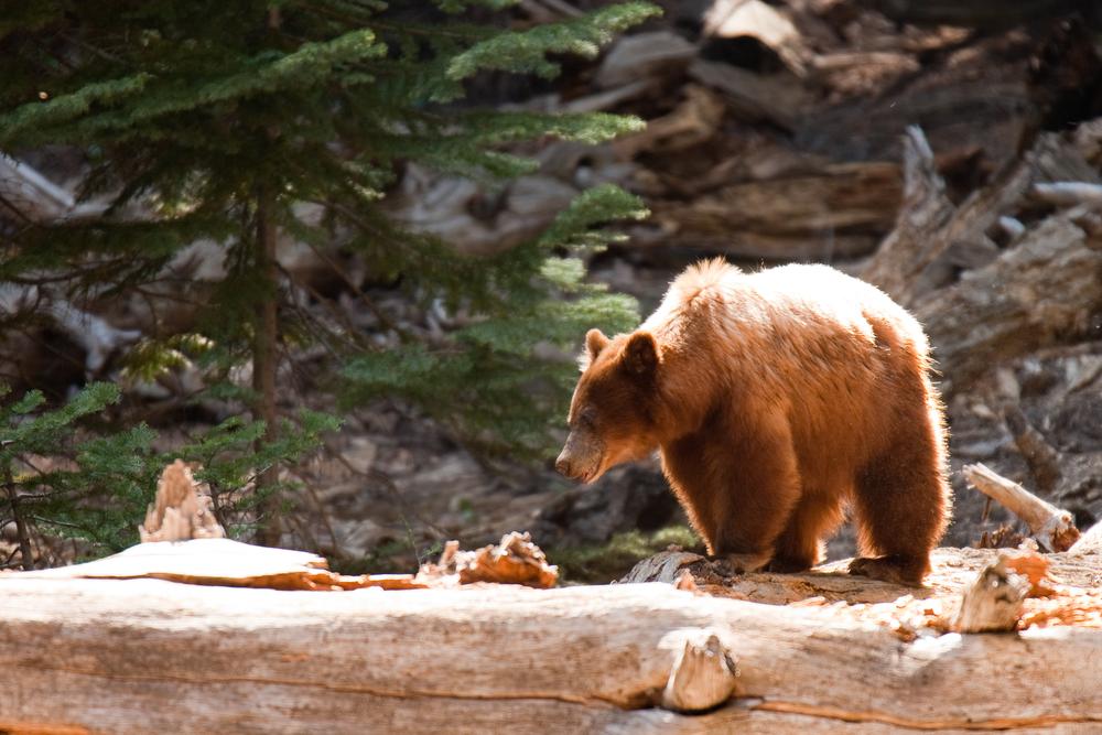 Unique Yosemite Airbnbs