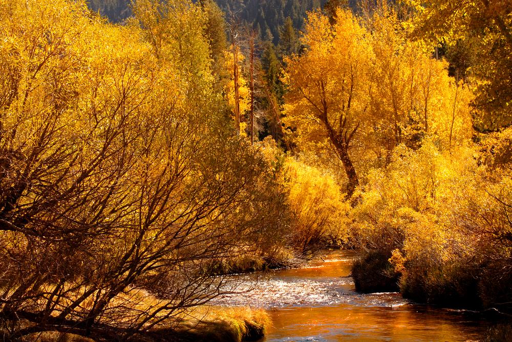 Yosemite CA Airbnbs