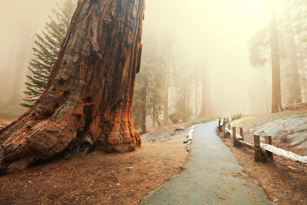 Yosemite Rentals