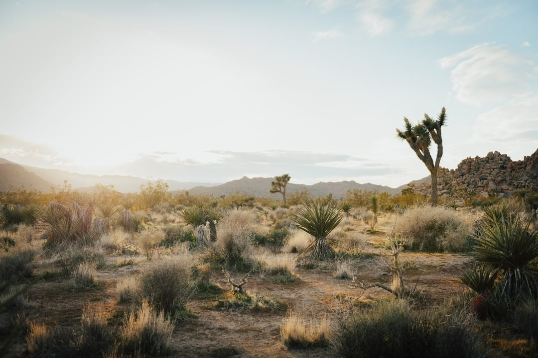 Joshua Tree desert with soft light