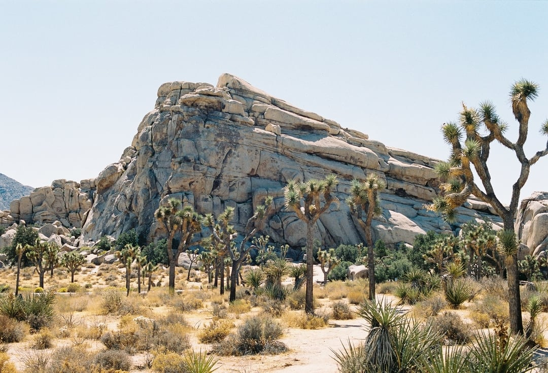 Large boulder next to a Joshua Tree in Joshua Tree National Park