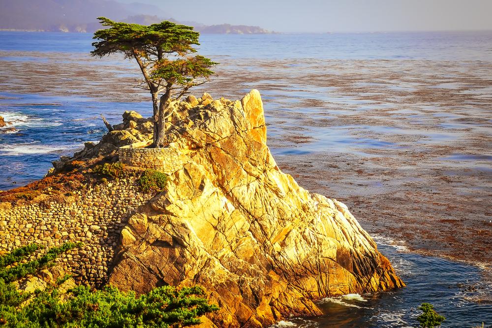 Family Airbnb Monterey