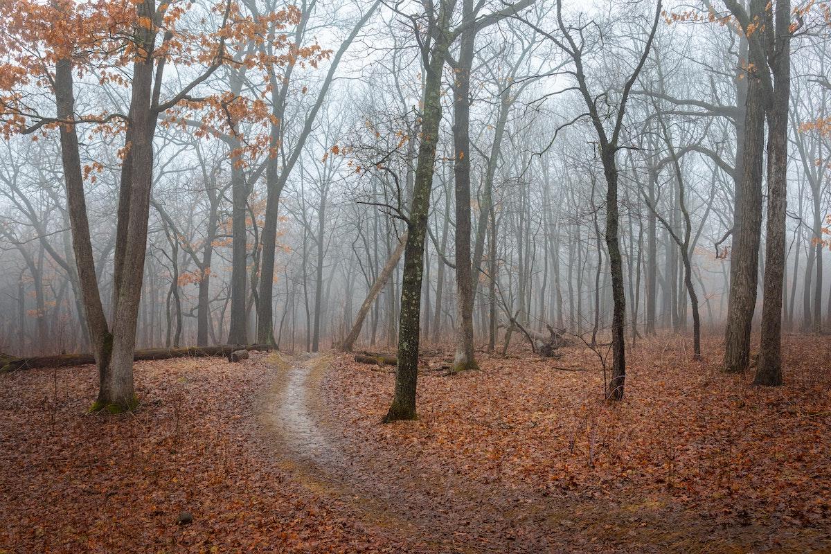 Wisconsin Trees