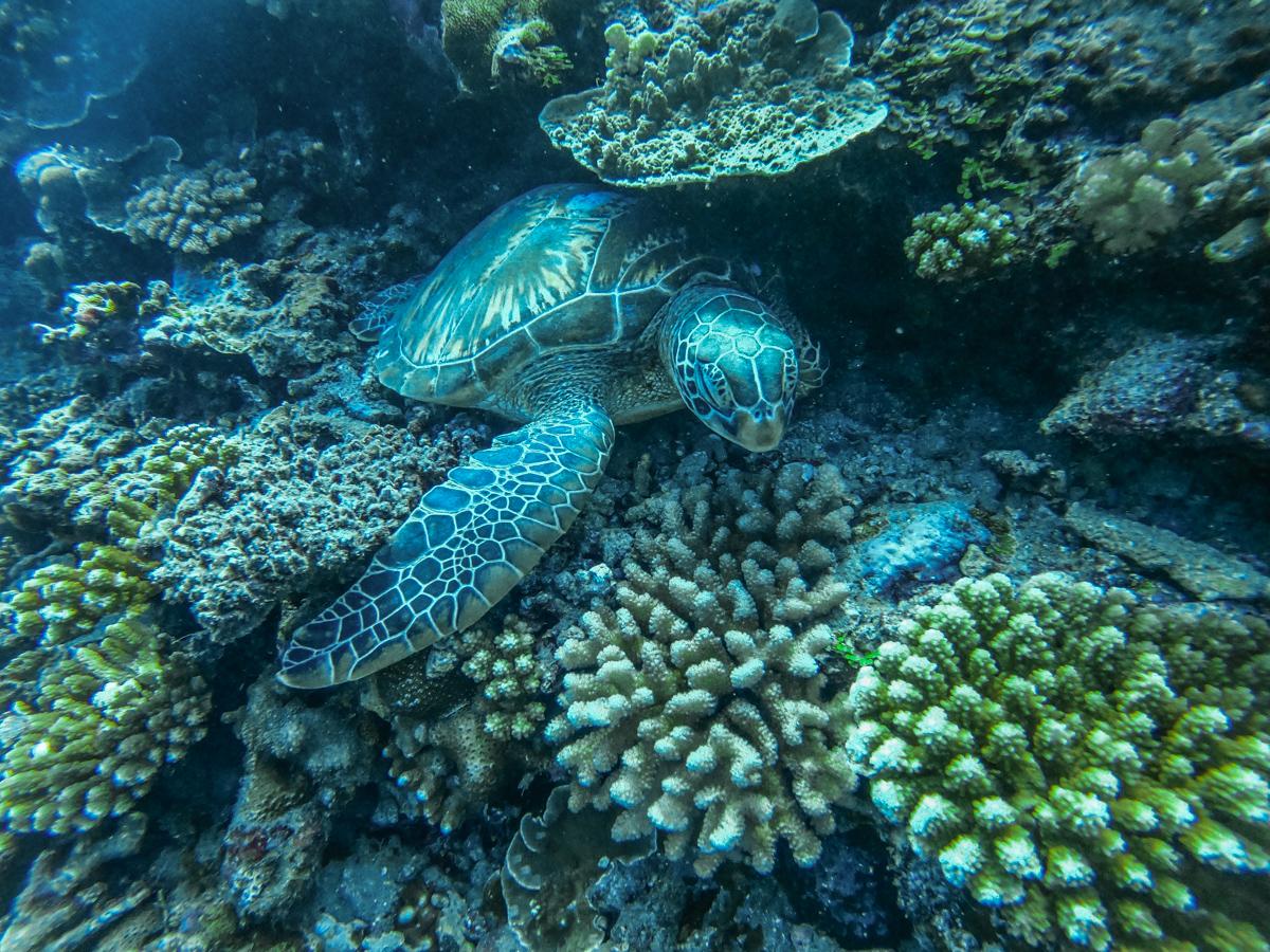 3 Days in Tahiti