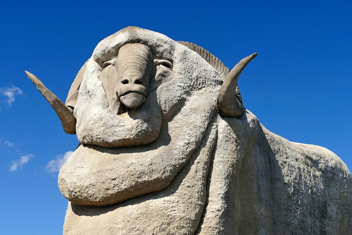 The Giant Merino Ram